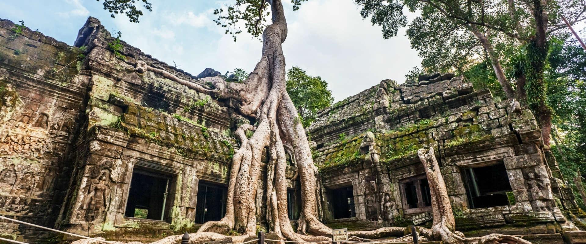 Ta-Prohm-Temple-Siem-Reap-Cambodia
